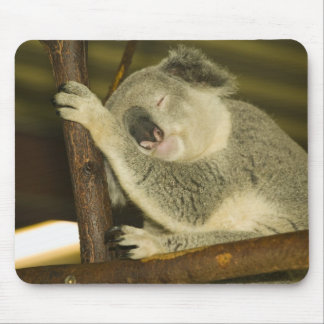 Australia, Queensland, Brisbane. Fig Tree Mouse Pad