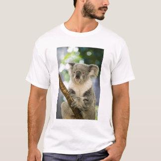 Australia, Queensland, Brisbane, Fig Tree T-Shirt