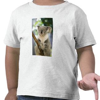 Australia, Queensland, Brisbane, higuera Camisetas