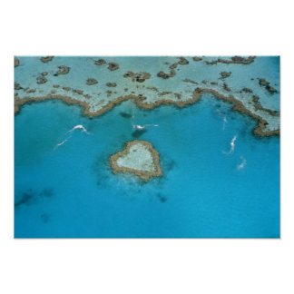 Australia, Queensland, las islas de Whitsunday, Póster
