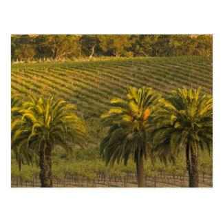 Australia, South Australia, Barossa Valley, Postcard