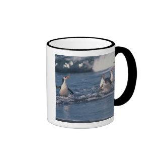 Australia, subantarctic Macquarie Island. Royal Coffee Mugs