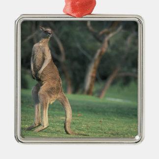 Australia, Vic. Canguro en el golf de Anglesea Adorno Navideño Cuadrado De Metal