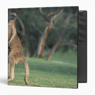 """Australia, Vic. Canguro en el golf de Anglesea Carpeta 1 1/2"""""""