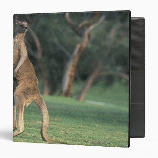 Australia, Vic. Kangaroo on the Anglesea Golf 3 Ring Binder