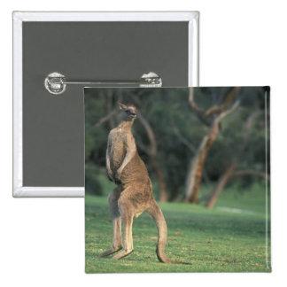 Australia, Vic. Kangaroo on the Anglesea Golf Button