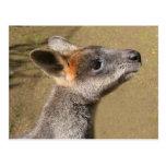 Australia - Wallaby Postcard