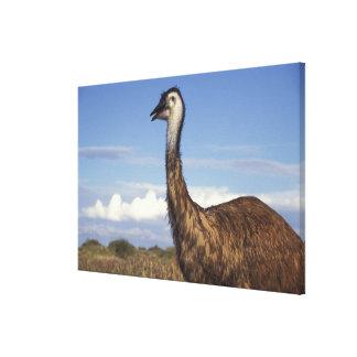 Australia, Western Australia. Emu (Dromaius Canvas Print