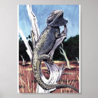 Australian Bearded Dragon Poster