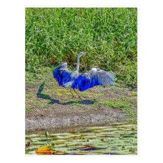 AUSTRALIAN BIRD STORK AUSTRALIA WITH ART EFFECTS POSTCARD