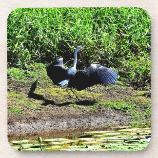 AUSTRALIAN BIRD STORK RURAL QUEENSLAND AUSTRALIA BEVERAGE COASTER