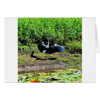 AUSTRALIAN BIRD STORK RURAL QUEENSLAND AUSTRALIA CARD