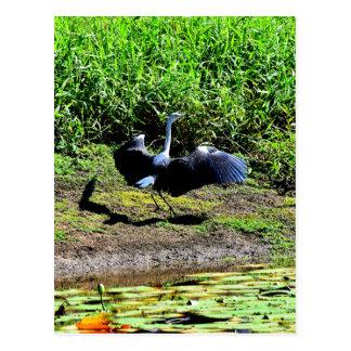 AUSTRALIAN BIRD STORK RURAL QUEENSLAND AUSTRALIA POSTCARD