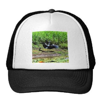 AUSTRALIAN BIRD STORK RURAL QUEENSLAND AUSTRALIA TRUCKER HAT