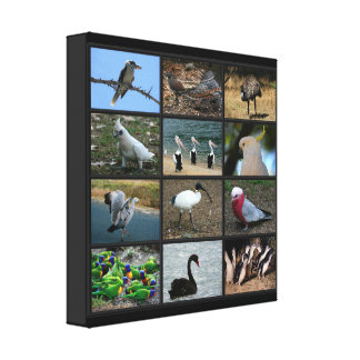 Australian Birdwatchers Collage Canvas Print