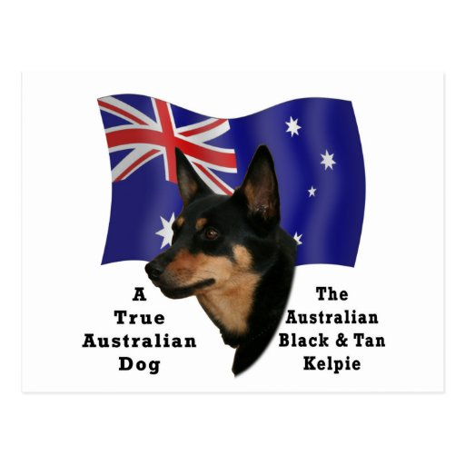Australian Black and Tan Kelpie with Flag Postcard
