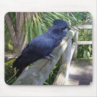 Australian Black Parrot Mouse Pad