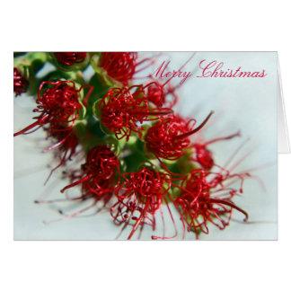 Australian Bottlebrush Christmas Card