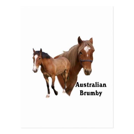 Australian Brumby - Horse Postcard