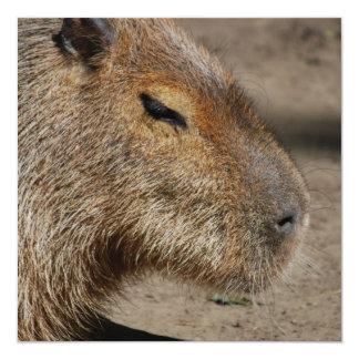 """Australian Capybara Invitations 5.25"""" Square Invitation Card"""