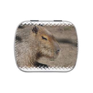 Australian Capybara Jelly Belly Candy Tin