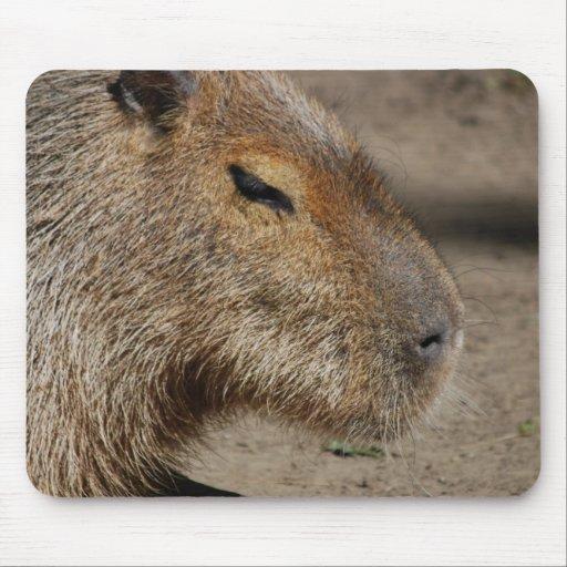 Australian Capybara  Mouse Pad
