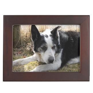 australian-cattle-dog-2 keepsake box