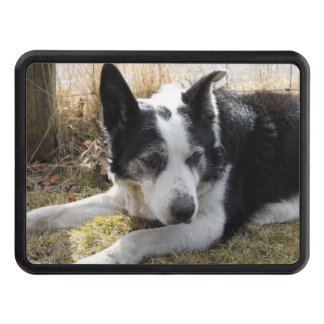 australian-cattle-dog-2 tow hitch covers
