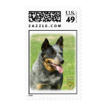 Australian Cattle Dog 9F059D-23 Postage Stamp
