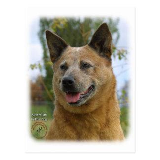 Australian Cattle Dog 9K009D-15 Postcard