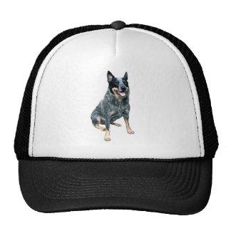 Australian Cattle Dog B Hats
