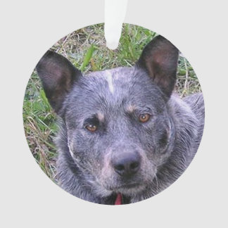 Australian_cattle_dog blue.png ornament