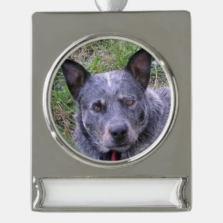 Australian_cattle_dog blue.png silver plated banner ornament