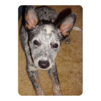 Australian_Cattle_Dog_blue puppy.png Card