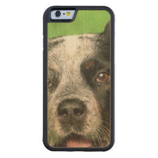 Australian Cattle Dog Carved Maple iPhone 6 Bumper Case