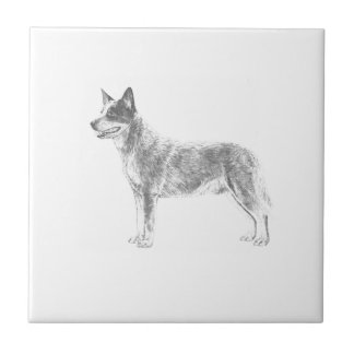 Australian Cattle Dog Ceramic Tile