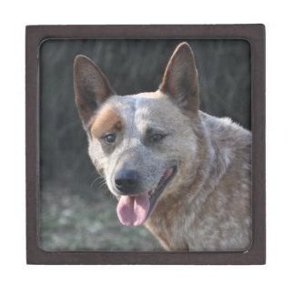 Australian Cattle Dog Gift Box