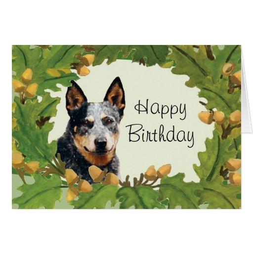 Australian Shepherd With Birthday Cake