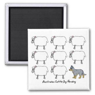 Australian Cattle Dog Herding Sheep Magnet