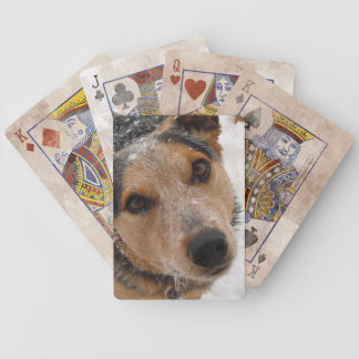 Australian Cattle Dog in Snow - Western Bicycle Card Deck