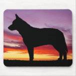 Australian Cattle Dog Mouse Pads