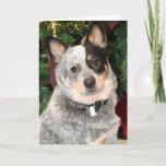 Australian Cattle Dog Photo Card