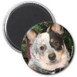 Australian Cattle Dog Photo Magnet