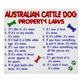 AUSTRALIAN CATTLE DOG PL2 POSTER