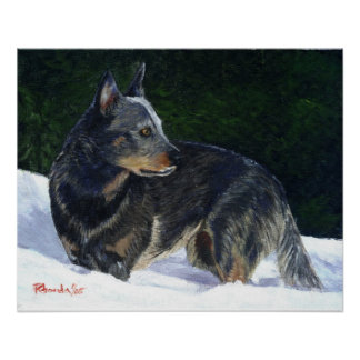 Australian Cattle Dog Portrait Poster