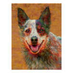 australian cattle dog posters