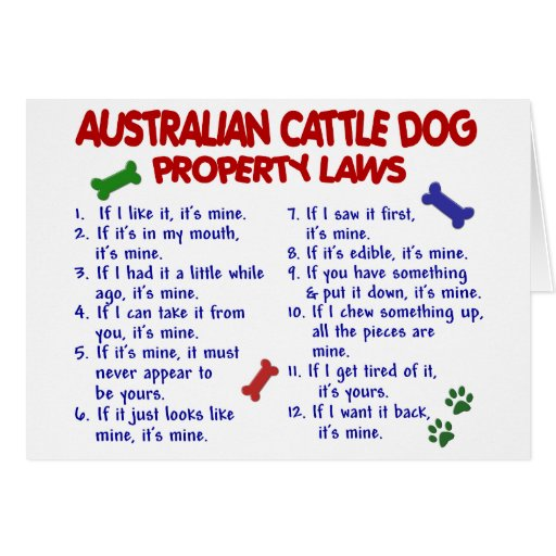 AUSTRALIAN CATTLE DOG Property Laws 2 Cards
