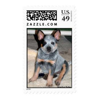 "Australian Cattle Dog Puppy "" Butter "" Stamp"