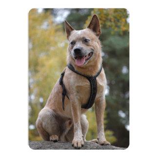 australian cattle dog red full.png card