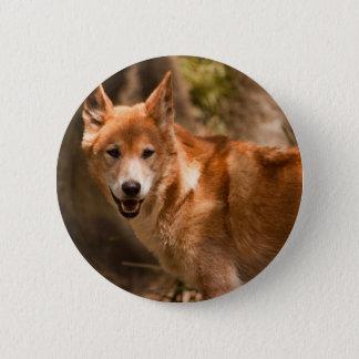 Australian Dingo badge Pinback Button